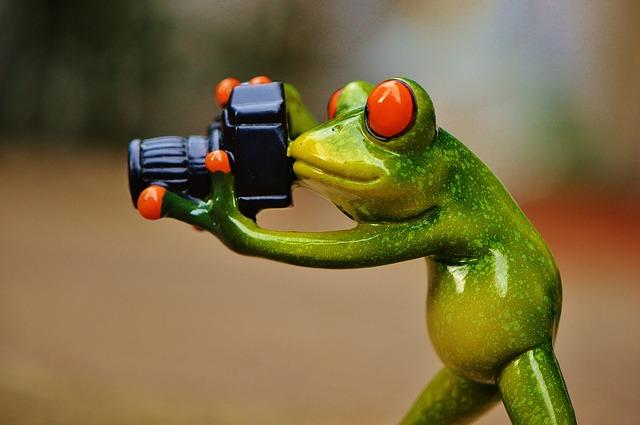 Photographer Frog