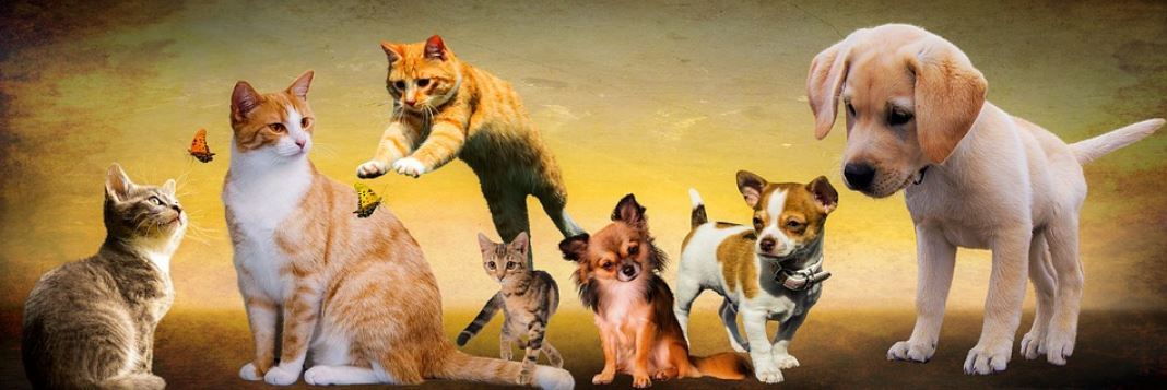 Picture of four cats and three dogs