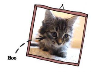 Jack and Aneisha's kitten Boo