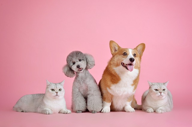 Photo of two white cats, a grey bichon frise, and a tan and white corgi - against a pink background. By huoagd, featured on Pixabay